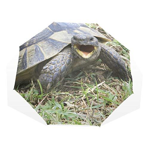 Regenschirm Griechische Schildkröte Testudo Graeca Ibera 3 Falten Leichte Anti-UV
