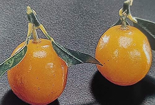国産 金柑ワイン煮 25粒 金柑甘露煮 業務用