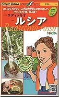 チコリー 種子 ルシア ラディッキオ 80粒