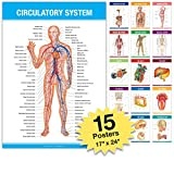 Anatomy Posters for Classroom or Office Decorations - Extra Large 26x17 inces (Pack of 15)