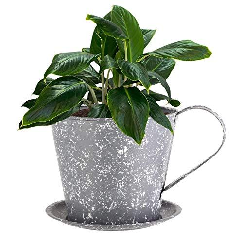 Dibor Flower Pot Novelty Teacup Saucer Planter Basket (CA60)