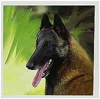 犬Belgian Malinois–Belgian Malinois Portrait–グリーティングカード Set of 12 Greeting Cards