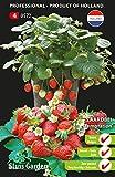 Tentazione di fragole (semi-grande fruttato)