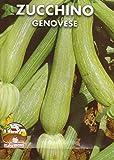 Italsementi Zucchino Genovese