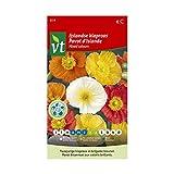 Amapola de Islandia Color mixto - semillas de flores