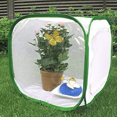 Hieefi Schmetterlingshaus, Schmetterlings-Garten Faltbare Cage Sämling Incubator Für Garten Insektenfraß 30 * 30 * 30cm