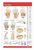 Permacharts Science Education Charts & Posters