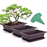 ADLOASHLOU 1 Set Plantador de Plastico para Plantas con 15 Etiquetas de Plantas, Maceta de Suculentas con Bandeja Maceta de Entrenamiento de BonsáI Decoración de Hogar y Oficina 6pieces-Big