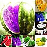 Semillas de sandía 30PCS multicolor gigantes semillas de sandía orgánicos semillas vegetales de frutas Vegetales Variedad para el jardín de Negro