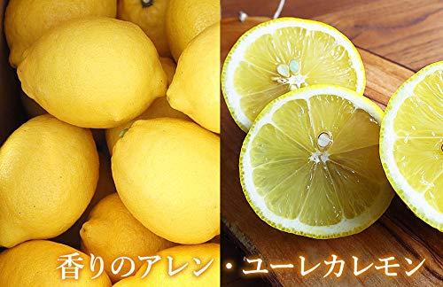 平岡農園淡路島レモンアレンユーレカレモン3kg
