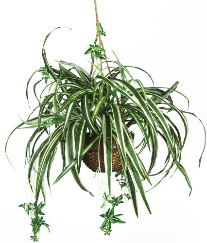 Nearly Natural 6607 Spider Hanging Basket Decorative Silk Plant, Green,10.25' x 10.25' x 17.5'