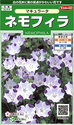サカタのタネ 実咲花6610 ネモフィラ マキュラータ 00906610