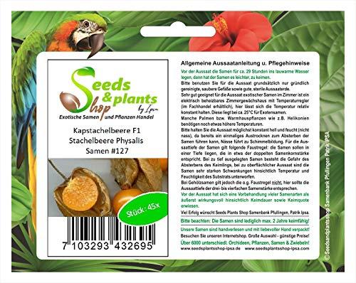 Stk - 45x Kapstachelbeere F1 Physalis Obst Pflanzen - Samen #127 - Seeds Plants Shop Samenbank Pfullingen Patrik Ipsa