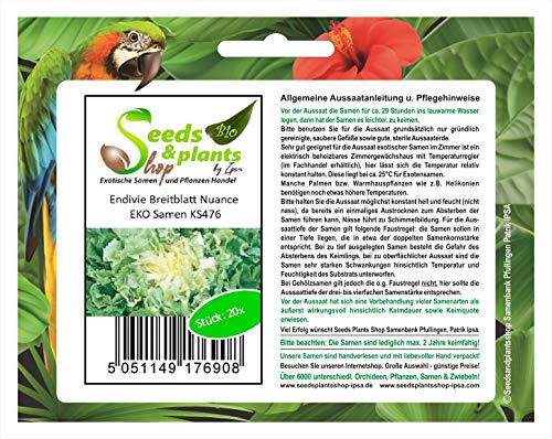 Stk - 20x Endivie Breitblatt Nuance EKO- Endivie Samen Gemüse KS476 - Seeds Plants Shop Samenbank Pfullingen Patrik Ipsa