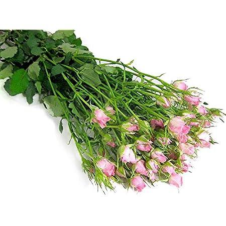 バラ 生花 切り花 薔薇 SPミニバラピンク プリシラ Pなど5本