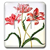 3dRose lsp_245068_2 Image of 1700s German Botanist Painting Red Flowers - Double Toggle Switch