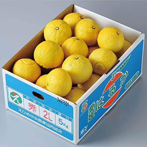 みかん はるか 秀品 2L〜Mサイズ 5kg 愛媛県 中島産 柑橘 ミカン バレンタイン ギフト 贈り物