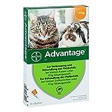 ADVANTAGE 40 mg Lsg.f.kl.Katzen/kl.Zierkaninchen 1.6 ml Lösung