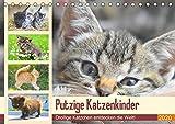 Putzige Katzenkinder. Drollige Kätzchen entdecken die Welt! (Tischkalender 2020 DIN A5 quer): Winzige Freigänger auf Entdeckungsreise! (Monatskalender, 14 Seiten ) (CALVENDO Tiere)