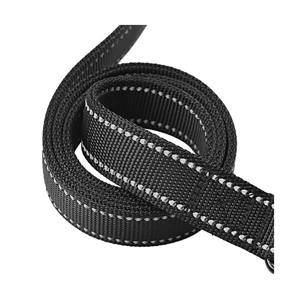 Leads, Collars & Harnesses for Staffies