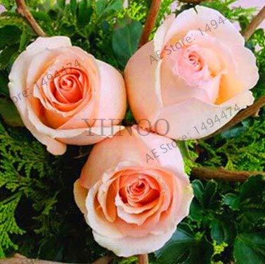 Bloom Green Co. ¡Venta!100 unids/bolsa rosal, flores color de rosa, plantas de flor de árbol bonsái, planta de árbol de rosa Balcón y amp; Patio en maceta para el jardín de su casa, OH0C0X: Deep Blue