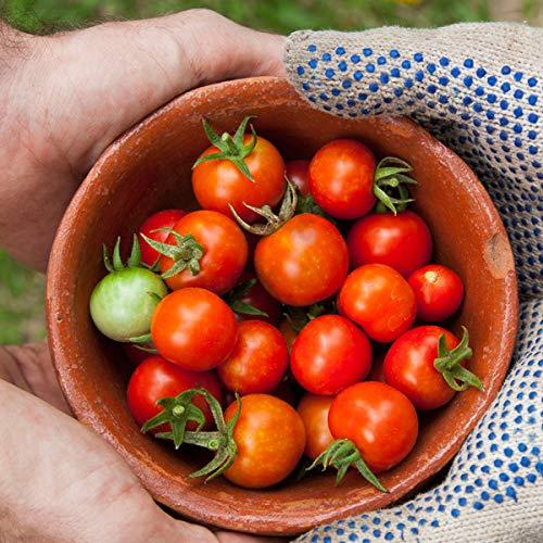 フルーツトマト 1kg 高糖度 ミニトマト 長崎県産