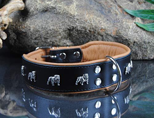 BULLYZEI breites Lederhalsband Englische Bulldogge 65cm x 5cm SCHWARZ-Natur