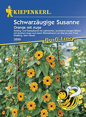 Schwarzäugige Susanne Thunbergia Orange mit Auge