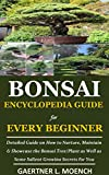 Bonsai Encyclopedia Guide for Every Beginner: Detailed Guide on How to Nurture, Maintain & Showcase the Bonsai Tree/Plant as Well as Some Salient Growing Secrets for You