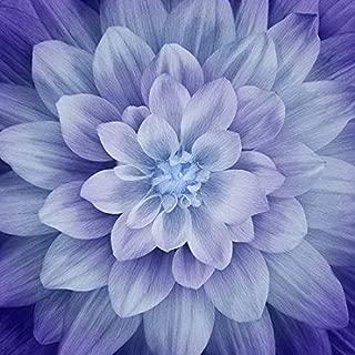 Dream Big - Hydrangea - Digital Panel -Large Floral - by Hoffman Fabrics