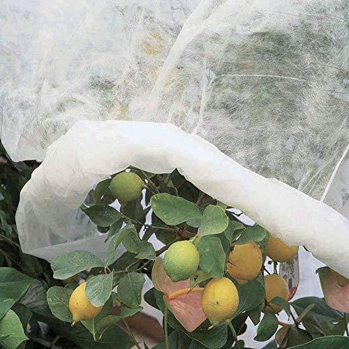 Todo Cultivo Winter-Schutz-Gewebe, Frostschutz, 2,4 x 10 m, für Gemüsegarten oder Bäume