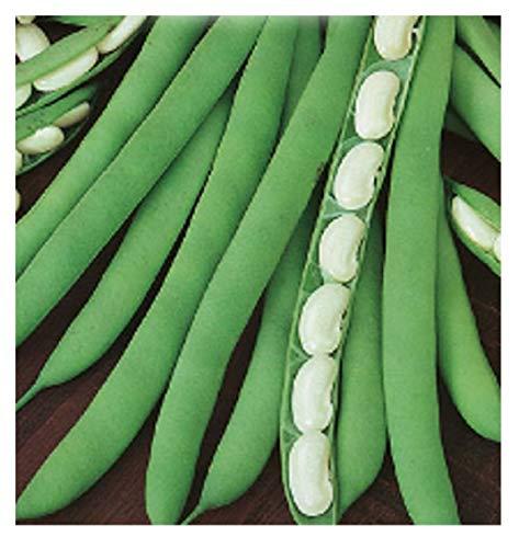 380 c.ca zaden nierboon tot shell cannellino - phaseolus vulgaris in originele verpakking gemaakt in italië - bruine bonen cannellini