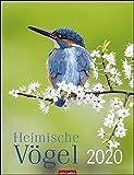 Heimische Vögel. Wandkalender 2020. Monatskalendarium. Spiralbindung. Format 30 x 39 cm