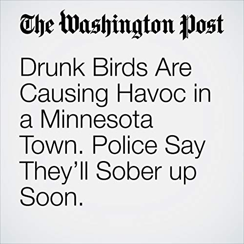 Drunk Birds Are Causing Havoc in a Minnesota Town. Police Say They'll Sober up Soon. copertina