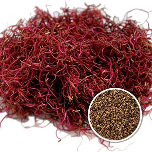 250 g BIO Keimsprossen Rote Rüben Keimsaat für die Sprossenanzucht Sprossen Microgreen Mikrogrün