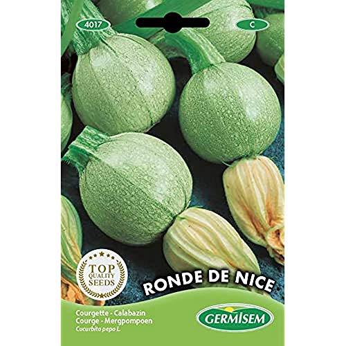 Germisem Zucchini RONDE DE NICE