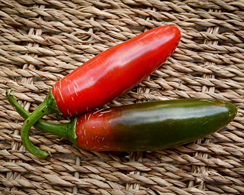 Sport Pepper Premium Seed Packet Record Hottest in The World + More