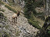 Steep Mountain Bulls | Montana Archery Elk with Karrson Koivisto and Andrew Gritzbaugh