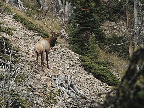 Steep Mountain Bulls   Montana Archery Elk with Karrson Koivisto and Andrew Gritzbaugh
