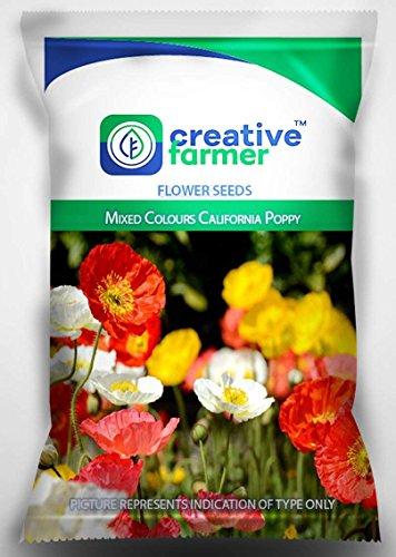 Pinkdose® Graines de fleur de Pinkdose pour de grandes zones - Mélange de couleurs Graines de fleur de pavot de Californie pour le jardinage - 1 paquet Par