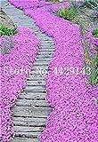 Generic Fresh 100 pcs semillas de flores ROCK CRESS para plantar rosa claro
