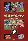 沖縄のウミウシ―沖縄本島から八重山諸島まで
