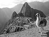 Bilderdepot24 Fototapete selbstklebend Alpaka am Machu