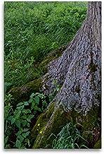 Premium textilduk 60 cm x 90 cm hög, september: I skuggan av de starka rötterna blommar så många krus.   Väggbild, bild på...
