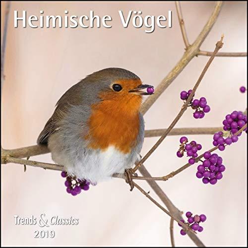 Heimische Vögel 2019 - Broschürenkalender - Wandkalender - mit herausnehmbarem Poster - Format 30 x 30 cm