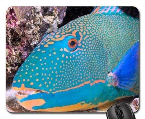 Fisch-themenorientiertes Gaming-Mauspad, Papageienfisch-Mauspad, Mousepad