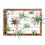 Mkono Air Plant Frame Tillandsia Wall Display, 7 7/8 Inch, 16 Inch 10 A wonderful way to display your tillandsias. This frame allows air and light to pass through. With hooks at the back, easy to hang anywhere, wall, windows or outdoor.