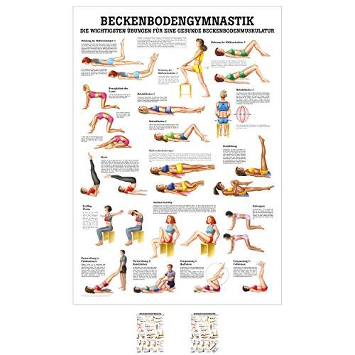 Sport-Tec Beckenbodengymnastik Mini-Poster Anatomie 34x24 cm medizinische Lehrmittel
