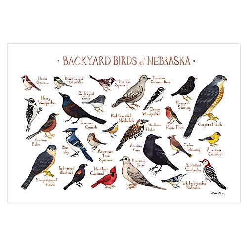 Backyard Birds of Nebraska Field Guide Art Print