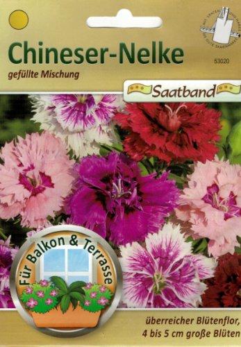Mélange chinois de noël pour balcon et terrasse, pour fleurs de 4 à 5 cm